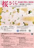 【特別展】 桜 さくら SAKURA 2020―美術館でお花見!―